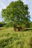 poulailler sous l'arbre des hauts de saint vincent